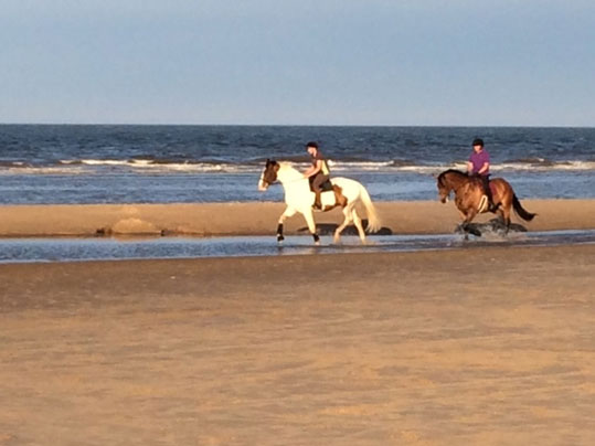 Lincolnshire equine holidays