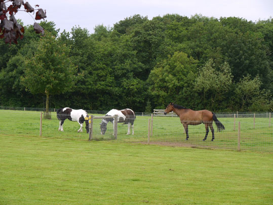 Horse holidays in Lincolnshire